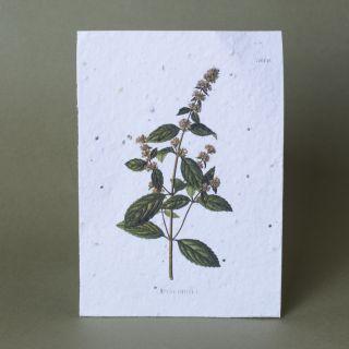 Gorilla Gardening Seed Paper