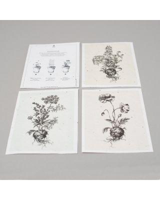 Seedpaper Andrea Noti
